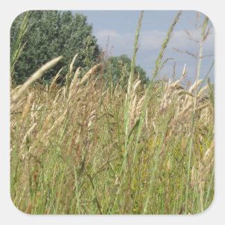 Adesivo Quadrado Paisagem do verão do campo selvagem no campo