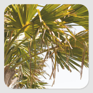 Adesivo Quadrado Palmeira da costa leste Myrtle Beach famoso