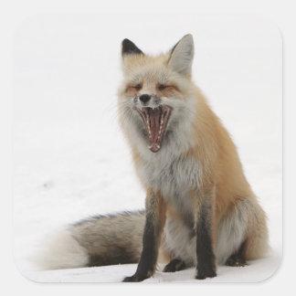 Adesivo Quadrado papel de envolvimento de bocejo da raposa, papel