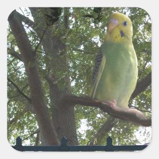 Adesivo Quadrado Parakeet
