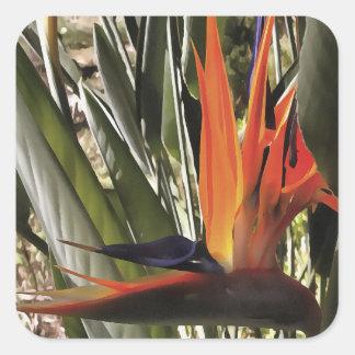 Adesivo Quadrado Pássaro de paraíso (Strelitzia)