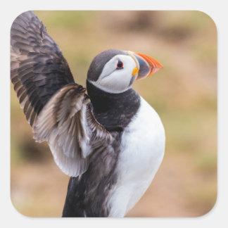 Adesivo Quadrado Pássaro do papagaio-do-mar