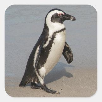 Adesivo Quadrado Passeio africano do pinguim