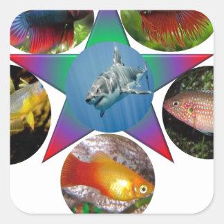 Adesivo Quadrado peixes, peixe dourado, carpa, pesca, mar, oceano,