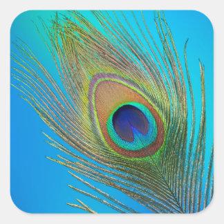 Adesivo Quadrado Pena de cauda do pavão