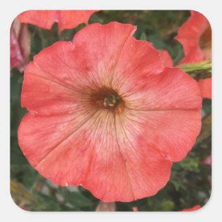 Adesivo Quadrado Petúnia cor-de-rosa