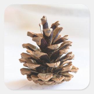 Adesivo Quadrado Pinecone