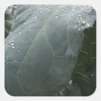 Adesivo Quadrado Pingos de chuva nas folhas da couve-flor