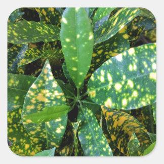 Adesivo Quadrado Planta do Croton