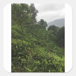 Adesivo Quadrado Plantação de chá