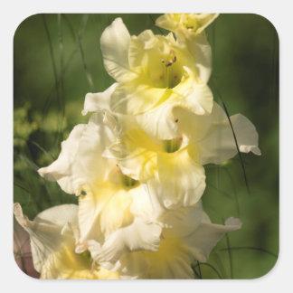 Adesivo Quadrado Ponto amarelo da flor do tipo de flor