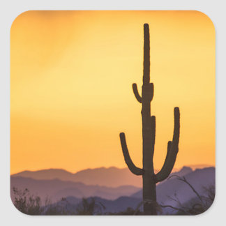 Adesivo Quadrado Por do sol de Scottsdale antes da tempestade