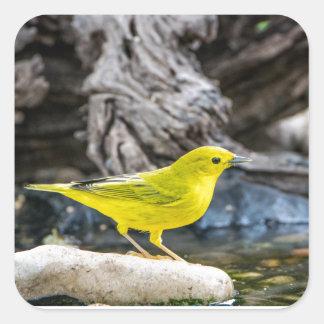 Adesivo Quadrado Presentes e acessórios do pássaro da toutinegra