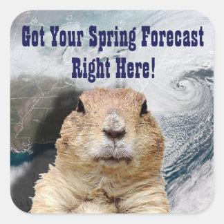 Adesivo Quadrado Previsão do primavera de Groundhog