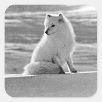 Adesivo Quadrado Raposa ártica 1970 dos EUA Alaska do vintage