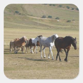 Adesivo Quadrado Rebanho dos cavalos