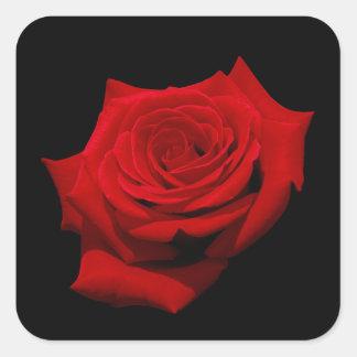 Adesivo Quadrado Rosa vermelha no fundo preto