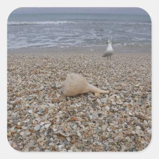 Adesivo Quadrado Seashells e gaivota de mar