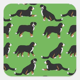 Adesivo Quadrado Sennenhund de Berna selecção