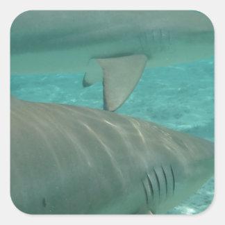 Adesivo Quadrado shark
