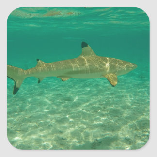 Adesivo Quadrado Shark in bora bora
