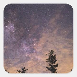 Adesivo Quadrado Silhueta das árvores na noite