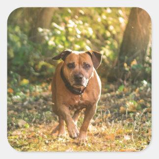 Adesivo Quadrado Staffordshire bull terrier