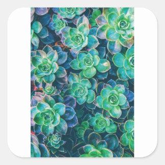 Adesivo Quadrado Succulents, Succulent, cacto, cactos, verde,