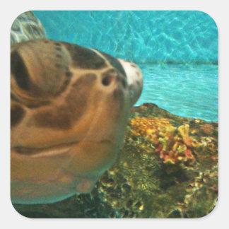 Adesivo Quadrado Surpresa da tartaruga de mar