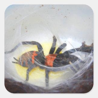 Adesivo Quadrado Tarantula