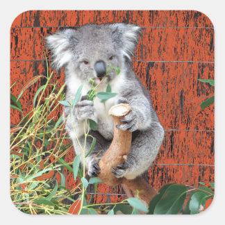 Adesivo Quadrado Tempo do petisco do Koala