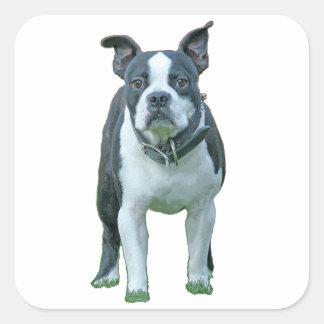 Adesivo Quadrado Terrier 1b de Boston