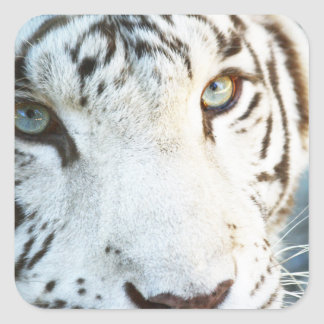 Adesivo Quadrado Tigre branco