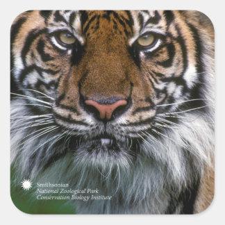Adesivo Quadrado Tigre Soyono de Smithsonian | Sumatran