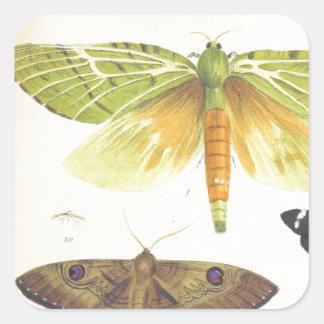 Adesivo Quadrado Traças e borboletas de Nova Zelândia