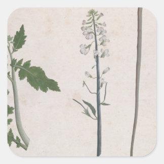 Adesivo Quadrado Uma planta de rabanete, uma semente, e uma flor