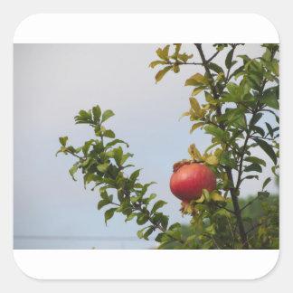 Adesivo Quadrado Única fruta vermelha da romã na árvore nas folhas