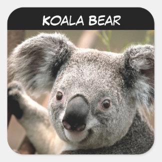 Adesivo Quadrado Urso de Koala bonito