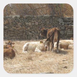 Adesivo Quadrado Vacas