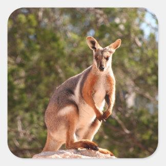 Adesivo Quadrado Wallaby de rocha amarelo-footed australiano