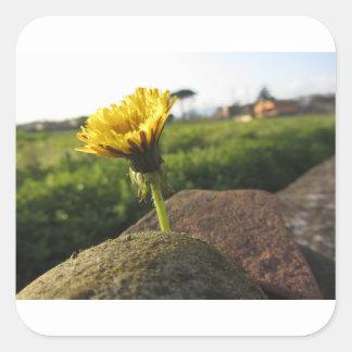 Adesivo Quadrado Wildflower amarelo que cresce em pedras no por do