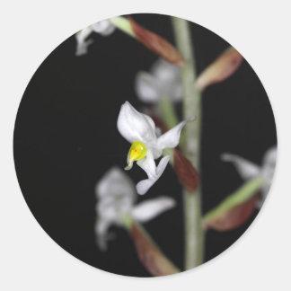 Adesivo Redondo A flor da orquídea Ludisia descolora-se