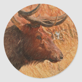 Adesivo Redondo Alces de Bull