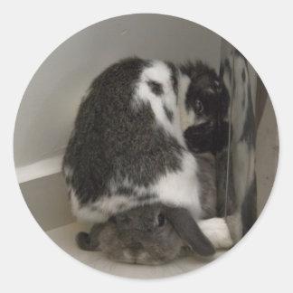 Adesivo Redondo Andora o coelho: Desaprovação