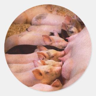 Adesivo Redondo Animal - porco - comida do conforto