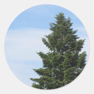 Adesivo Redondo Árvore de abeto verde contra um céu claro