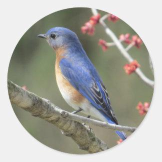 Adesivo Redondo Bluebird