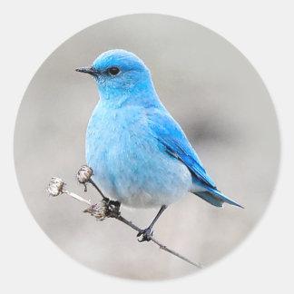 Adesivo Redondo Bluebird bonito da montanha