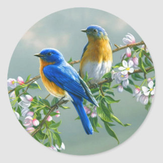 Adesivo Redondo Bluebird. Sialis oriental americano do Sialia do