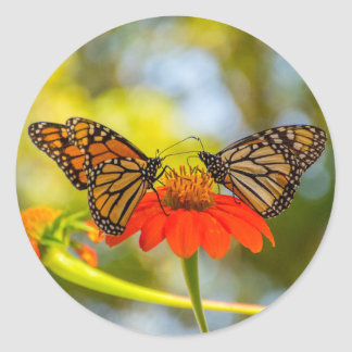 Adesivo Redondo Borboletas de monarca em Wildflowers